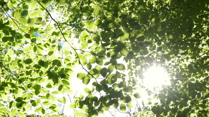 Sun shining through the branches of trees. Nature scene,