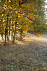 Autumn forest and sun rays