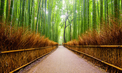 Path to bamboo forest, Arashiyama, Kyoto, Japan. © lkunl