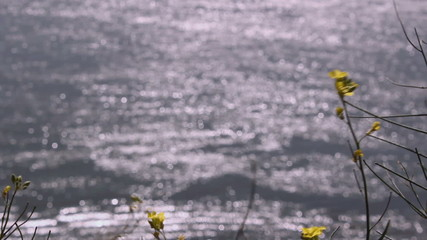 Wildflowers waving on strong wind upon Danube rivier