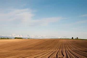残雪の山並みと耕した畑