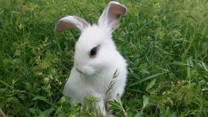 Cutest white rabbit