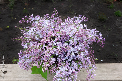 Foto op Canvas Lilac a blooming bouquet of lilacs