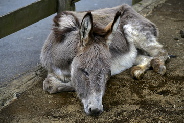 Dreamed about donkey
