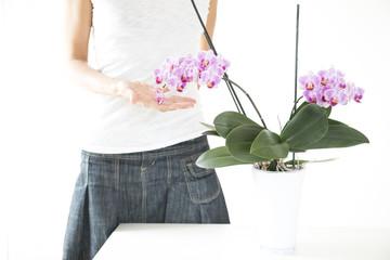 delicatezza delle orchidee