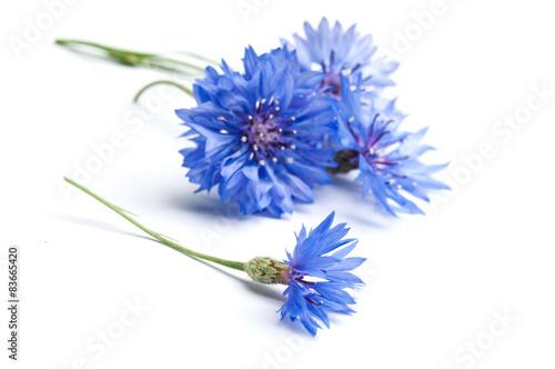 Leinwanddruck Bild bleuets sur fond blanc