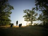 Mujer paseando con sus mascotas por el bosque al atardecer