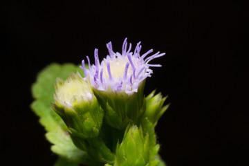 macro flower