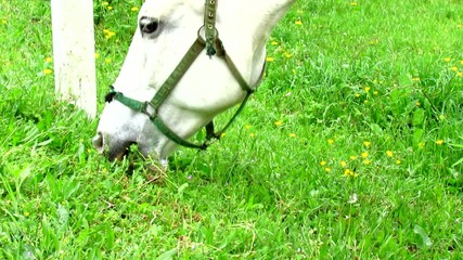 Horse eating grass in green meadow