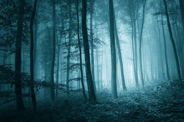 Dreamy mystic blue color foggy forest