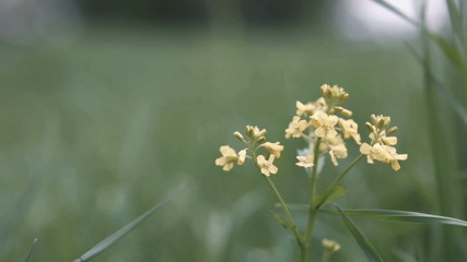 Yellow Flower Swaying In The Wind