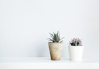 succulent and cactus in the pot. Scandinavian white interior