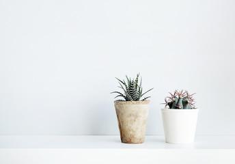 succulent and cactus in the pot. Scandinavian white interior