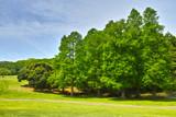 新緑の草原と森