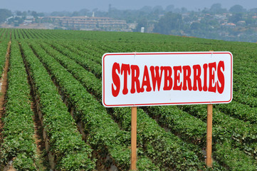 Strawberry fields