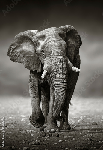 Elephant approach from the front © JohanSwanepoel