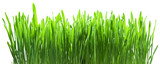 Green grass isolated on a white backgroud.
