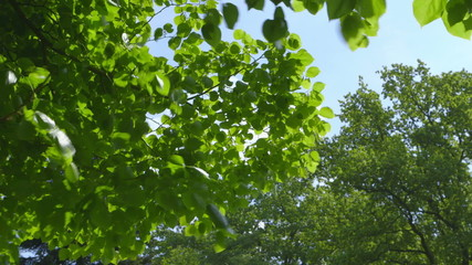 Beautiful fresh green Leaves  - different takes