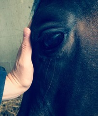 Menschenhand und Pferdestirn