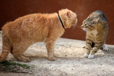 Fototapety Fighting homeless cats