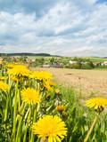 Fototapeta Löwenzahl im Vordergrund vor ländlicher Landschaft