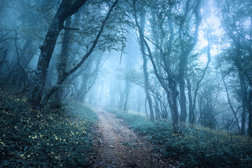 Trail through a mysterious dark forest in fog © den-belitsky