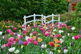 Tulips and a bridge in Keukenhof garden, Netherlands