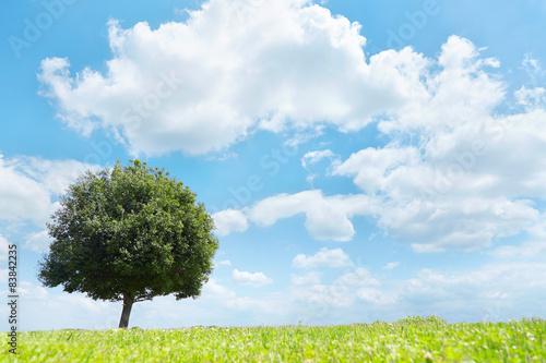Tuinposter Blauw 一本木のある草原