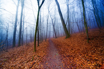 Twilight in autumn forest © science photo