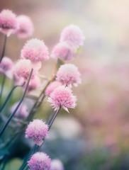 Różowe kwiaty na łące