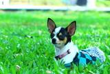 Fototapeta Domowy pies