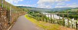 Fototapety Malerischer Blick auf die Mosel und Weinberge