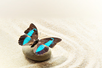 Butterfly Prepona Laerte on the sand