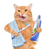 Fototapety Brushing teeth cat.
