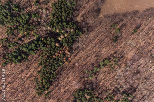 Foto op Canvas Natuur aerial view of spring time forest