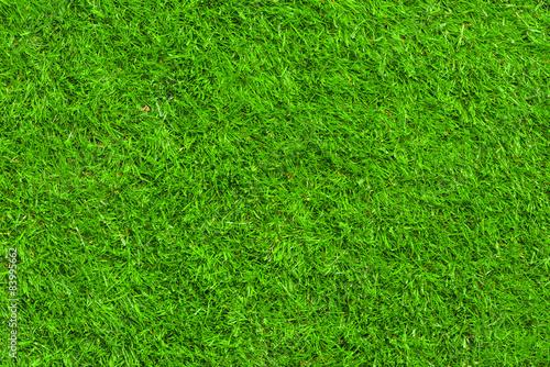 Papiers peints Herbe Green grass texture