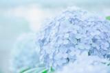 Fototapety hydrangea flower