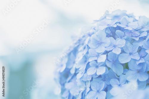 Fotobehang Hydrangea hydrangea flower