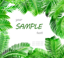 Frame of green palm leaves isolated on white © Africa Studio