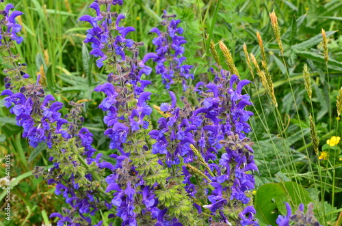 blaue wildblumen mit gr sern feldblumen wiesenblumen stockfotos und lizenzfreie bilder auf. Black Bedroom Furniture Sets. Home Design Ideas