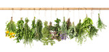 Fototapety Fresh herbs hanging. Basil, rosemary, thyme, mint, dill, sage
