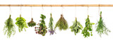 Fototapety Collection of fresh herbs. Basil, sage, dill, thyme, mint, laven