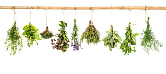 Collection of fresh herbs. Basil, sage, dill, thyme, mint, laven © LiliGraphie