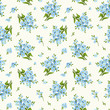 Seamless pattern with blue forget-me-not flowers. Vector.