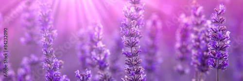 Leinwanddruck Bild Lavender