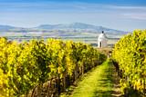 chapel with vineyard near Velke Bilovice, Czech Republic - 84269806