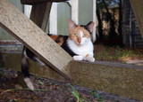 Feral Calico Cat poster