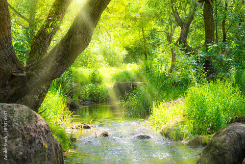 Stream in the tropical forest - 84326837