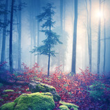 Magical light in foggy forest with sun - 84338689