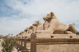 Fototapeta ancient egypt statues of sphinx in Luxor karnak temple